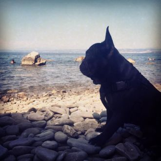 I suoi occhi mi mostrano solo il meglio #leon #sempreinsieme #iloveyou #ilovemydog #love #sea #summertime #summer #orizzonte #scrutare #looking #bullies #bullo #frenchbulldogsofinstagram #frenchbulldog #frenchdogs #bulldog #bulldogfrench #bulldogfrances #bulldogfrancese #sky #ligthblue #black #dog #spotrevealed #slovenia #portorož #turistico #turistando #turist