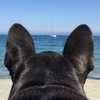 Radar ignition: ☑️ 📡 #bulldog #frenchbulldogsofinstagram #frenchbulldog #igslovenia #photooftheday #picoftheday #staremosempreinsieme🐾👣 #iloveyou #love #lovemydog #ilovemydog #dog #dogoftheday #spotrevealed #sea #summer #summertime #holiday #portorož #piran #fiesa #slovenjia #marines #radar #boat #petsofinstagram #nofilterneeded #nofilter #nofilters